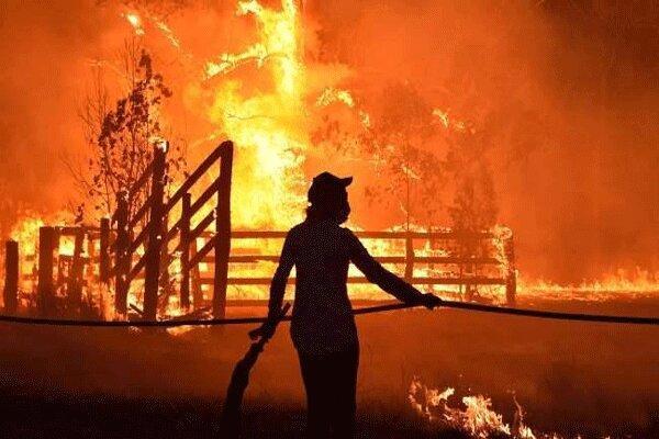 افزایش تلفات آتش سوزی های جنگلی در استرالیا