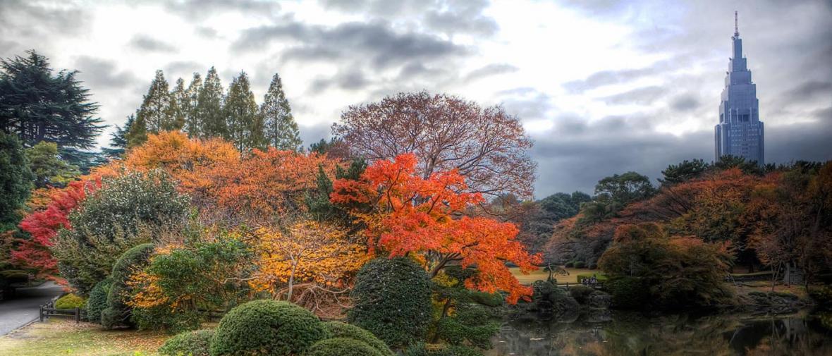 زیباترین مناظر پاییزی توکیو