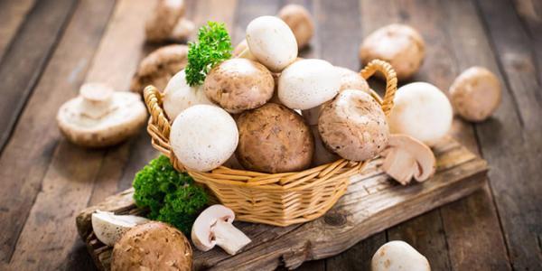 آشنایی با خواص درمانی و ارزش غذایی قارچ