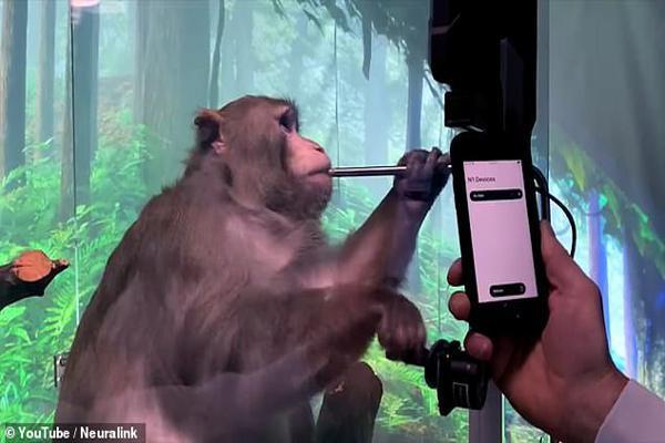 ایلان ماسک؛ از میمون خبرساز تا تونل کسل کننده! (تصاویر)